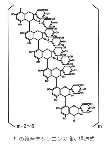 柿渋の化学構造式